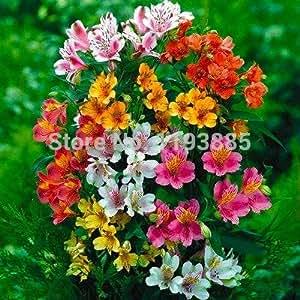 100/bag Peruvian Lily Seeds~ Peruvian Lily Mix (Alstroemeria) FLOWER SEEDS-Perennial