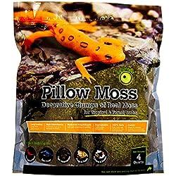 Galápagos (05234) Pillow Moss, Clumps of Real Moss, Natural, 4QT