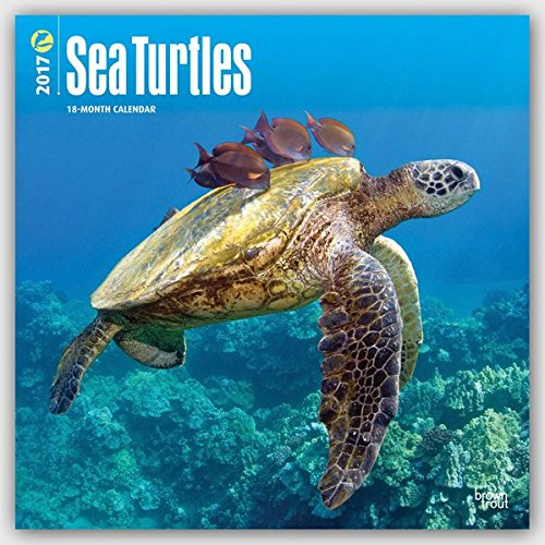 Sea Turtles 2017 Square (Multilingual Edition)