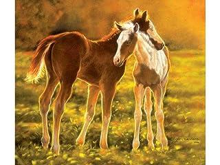 SunsOut 39506 - Harrison: Backlit Foals - puzzle 550 pezzi