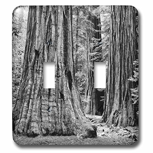 3D Rose LSP_229912_2 USA, California, Yosemite National Park. Sequoia Trees Double Toggle Switch