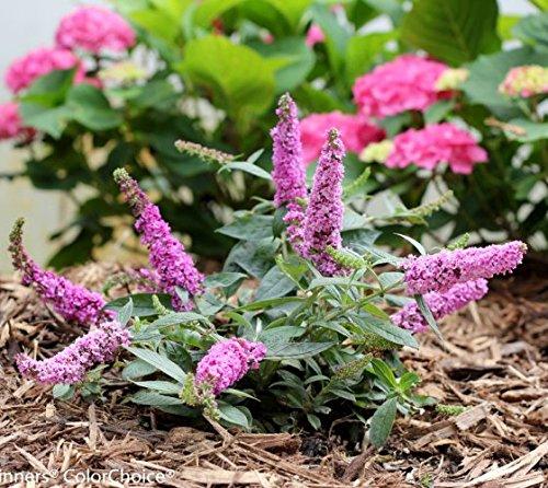 Lilac Garden Nursery - 1