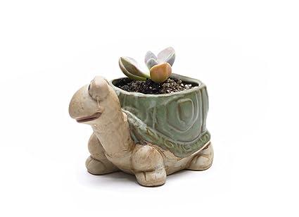 amazon com ceramic home garden flower planter pot outside cute