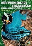 Der Türkisblaue Zwerggecko: Lygodactylus williamsi (Art für Art / Terraristik)