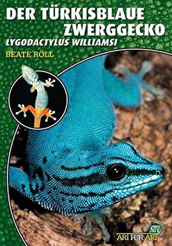 Der Türkisblaue Zwerggecko: Lygodactylus williamsi (Art für Art)