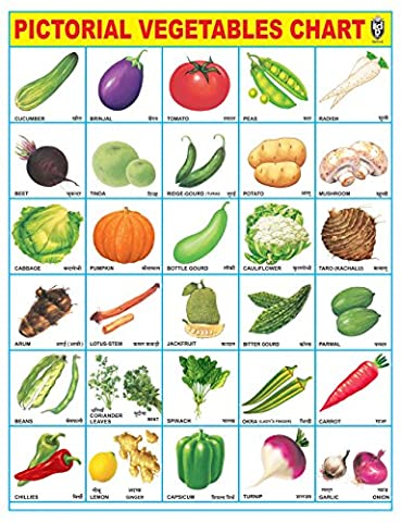 IBD Pre-School Toddler's PVC Laminated Educational Vegetable Chart Single Side Poster Wall Chart