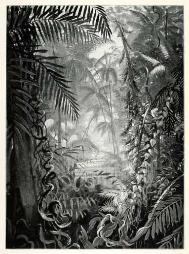 1898-print-pioneer-river-jungle-vegetation-trees-plants-australia-leaves-vines-original-halftone-pri