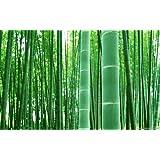 Asklepios-seeds® - Moso Bambus, Riesenbambus, Samen, Phyllostachys pubescens (edulis) (100 Samen)