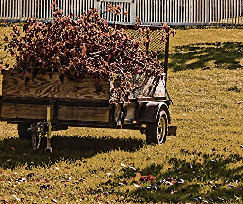 LAMINATED POSTER Autumn Wagon Nature Poster Print 24x (Berlin Sport Wagon)