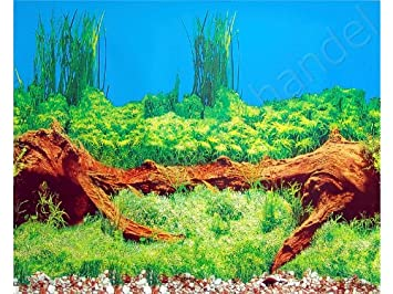 hintergrund aquarium