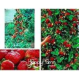 Nuovo arrivo! 200 pc / sacchetto di arrampicata semi rossi della fragola con la salubre GUSTO * NON-OGM fragola Monte Everest * * COMMESTIBILE frutta, #