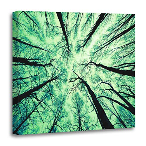 - Emvency Canvas Wall Art Print Green Cedar Looking Up at The Sky White Aspen Artwork for Home Decor 20 x 20 Inches