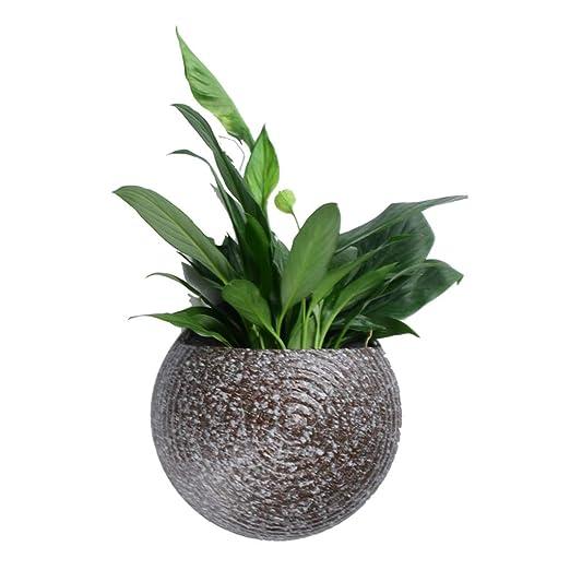 Soportes para plantas Soporte de Flor Colgante de Pared Maceta de ...