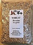 Hard White Wheat Berries, 1 lb.
