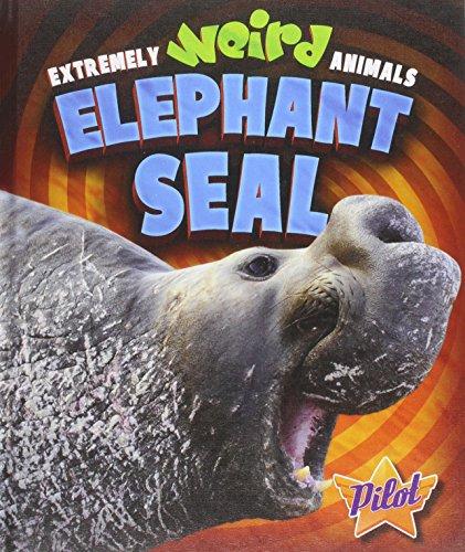 elephant seals - 7