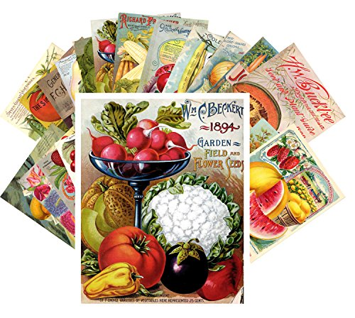 Postcard Set 24 cards Veges and Fruits Vintage Seed Pockets Gardens