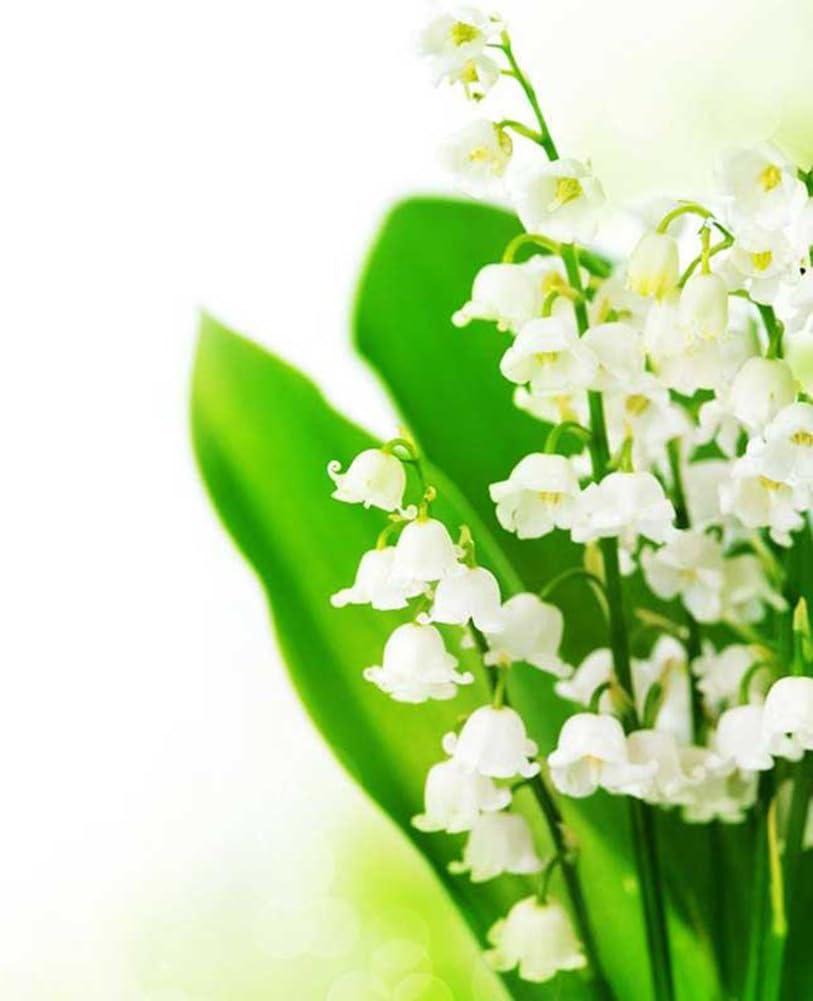 lamta1k 20Pcs Flores Convallariae Flores de Lirio de los Valles Calidad de semilla y Alta tasa de Supervivencia Crecimiento r/¨/¢Pido Crecimiento r/¨/¢Pido Planta de Jard/¨/ªn Bonsai