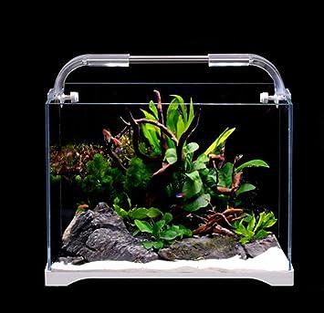 Pequeño Acuario de Vidrio ecológico de Escritorio - Acuario pequeño para Peces de Colores: Amazon.es: Hogar