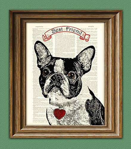 BOSTON TERRIER dog beautifully upcycled vintage dictionary page book art print - Boston Terrier Artwork