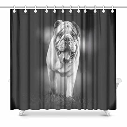 Amazon INTERESTPRINT English Bulldog Black And White Photo