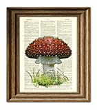 Red Mushroom Fly Agaric toadstool illustration beautifully upcycled dictionary page book art print