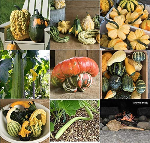 - David's Garden Seeds Collection Set Gourd (Open Pollinated) JE9321 (Multi) 9 Varieties 350 Seeds (Non-GMO, Organic, Heirloom)