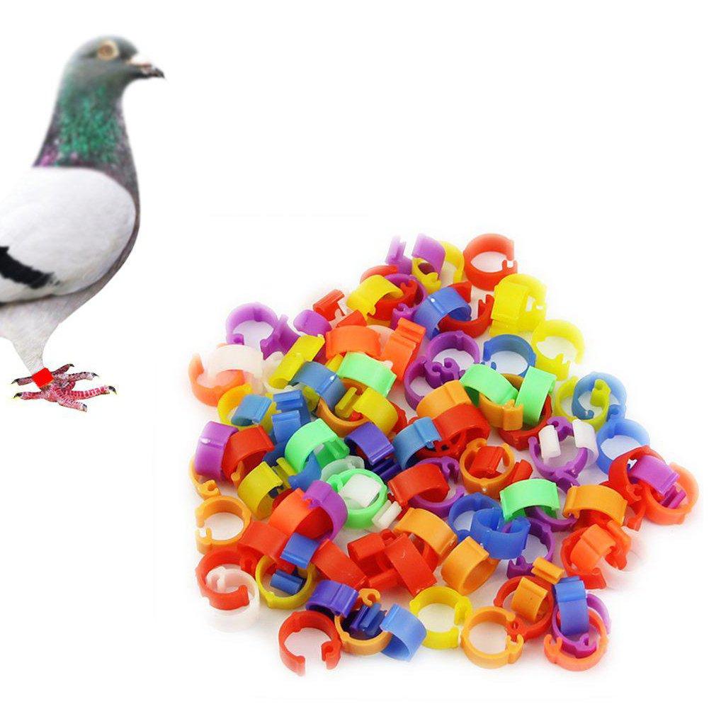 p/ájaros para gallinas Loros Aves de Corral Anillos Pollitos 100 Unidades gallinas 8 mm gallinas Soldmore7 Anillos para Patas de Aves de Corral