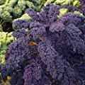 1000 Seeds Scarlet Kale Seed - Multi-purpose, Open-pollinated Kale.vegetables, Kale,scarlet