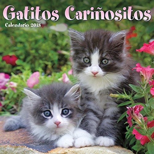 Gatitos cariñositos (Cuddly Kittens)  Wall Calendar(Spanish ...