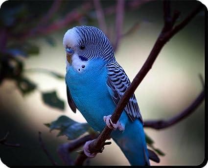 Perruche Ondulee Bleu Perruches Bird Tapis De Souris 5 Amazon Fr Informatique