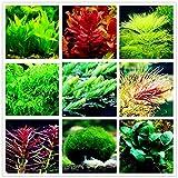 FidgetKute Aquarium Plant Mix Seeds Water Grasses Random Aquatic Plant Grass Indoor Fish