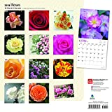 Roses 2018 12 x 12 Inch Monthly Square Wall Calendar, Flower Floral Plant Outdoor Nature Gardening