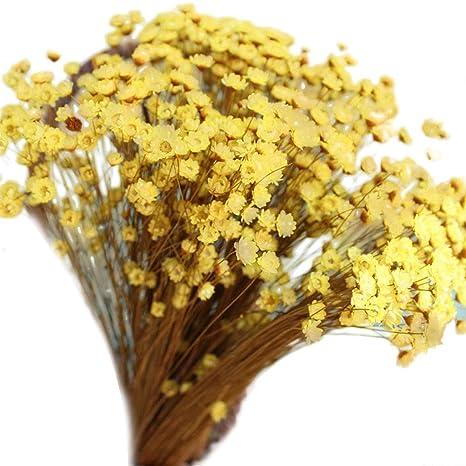 Vorcool 100pcs Belle Mini Marguerite Fleurs Sechees Decoratives