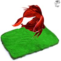 Betta Carpet by Luffy - Lush Green Landscape in Aquarium - Natural Habitat for Betta - Create a Moss Carpet - Thrive with Minimal Care