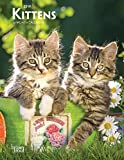 Download Kittens 2019 6 x 7.75 Inch Weekly Engagement Calendar, Animals Kittens in PDF ePUB Free Online