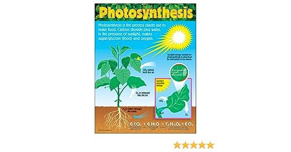 CHART PHOTOSYNTHESIS GR 4-8: Amazon.es: Juguetes y juegos