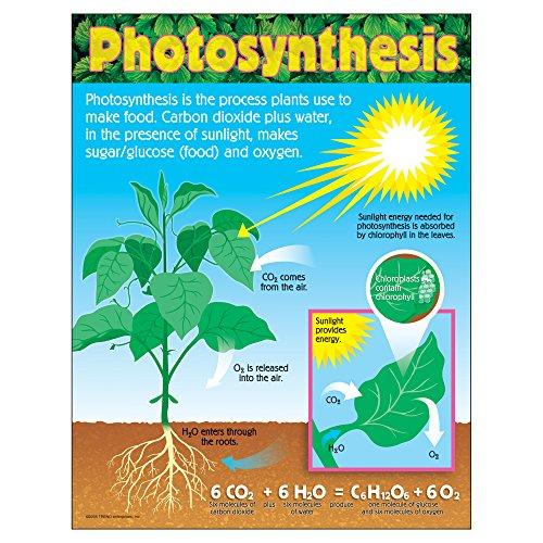Plant Science Classroom - 5