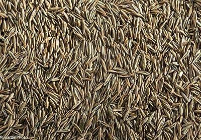 WaterSaverLawn Seed Blend
