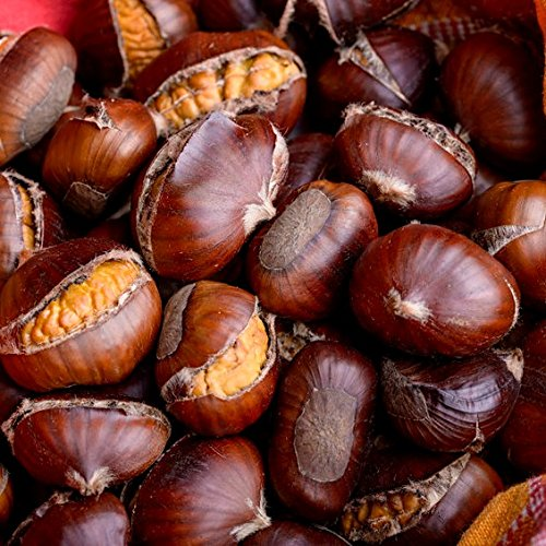 Pack of 1, 25 Lbs. Fragrance Oil Roasted Chestnuts Scent, Phthalate Free