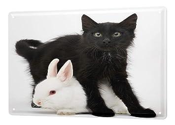 Cartel Letrero de Chapa XXL Cocina gato negro conejo blanco: Amazon.es: Hogar