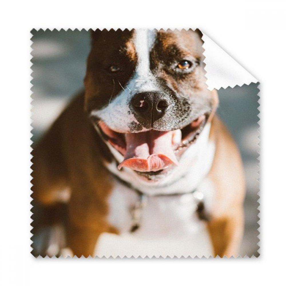 Bulldog ペット用動物用目立つ絵のメガネクロス クリーニングクロス 携帯電話用スクリーンクリーナー 5個ギフト用   B0761TDK6N