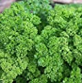 Parsley Triple Moss Curled Seeds Choose from a variety of packet sizes below. Many size choices. Microgreen or Farm #59