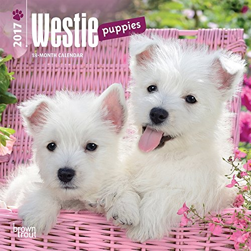 "West Highland White Terrier Puppies 2017 Mini Calendar 7"" x 7"""