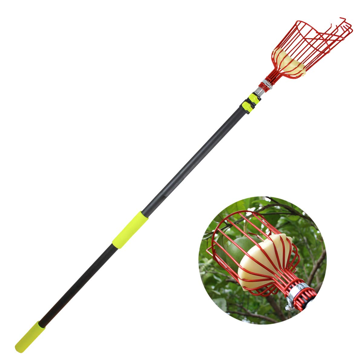 Mesa Fruit Tree Picker with telescoping Pole and Twist-on Basket, Red Head Lightweight Aluminum Extension Picking Tool 13ft for Getting Apples Oranges and All Fruits by Mesa