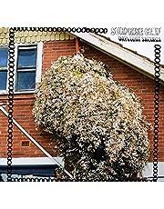 Daylight Savings (Vinyl)