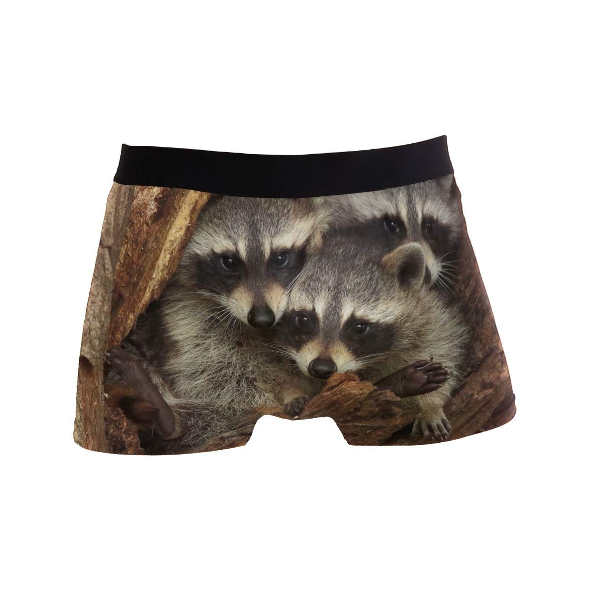 Jereee Three Cute Raccoons Mens Underwear Soft Polyester Boxer Brief for Men Adult Teen Children Kids S