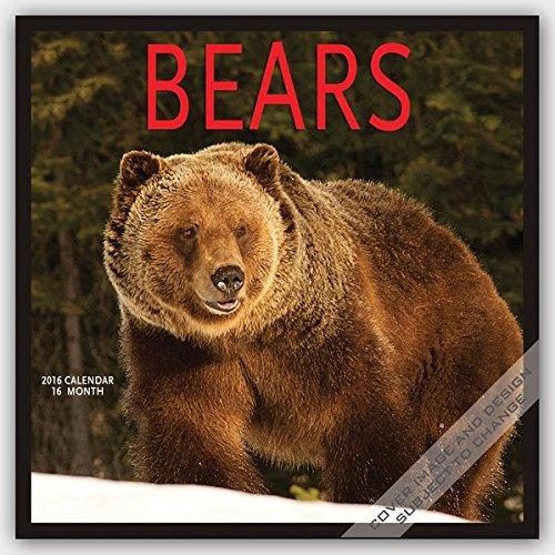 Bears 2016 - Bären - 16-Monatskalender: Original BrownTrout/Wyman Publishing-Kalender [Mehrsprachig] [Kalender] (Wall-Kalender)