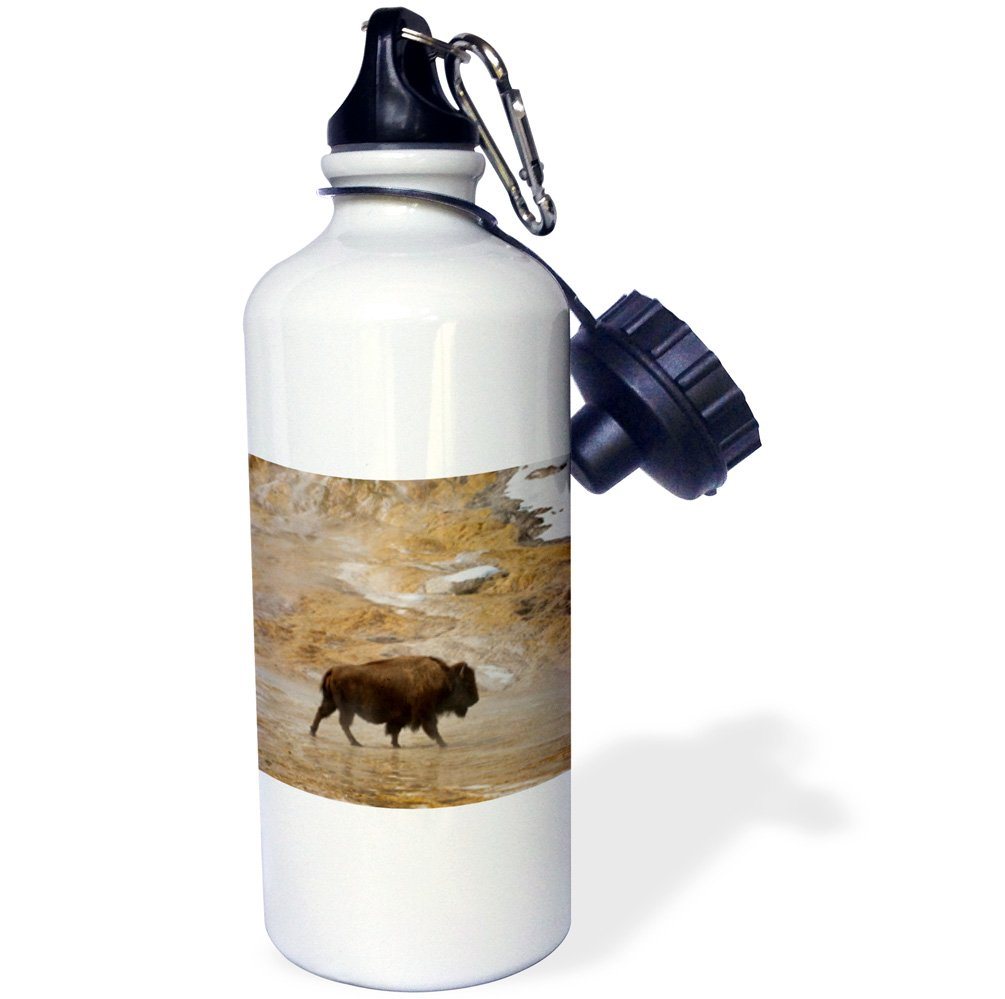 Yellowstone NP Wyoming-Sports Water Bottle wb/_210338/_1 21oz 3dRose Buffalo traverses Mammoth Hot Springs Multicolored