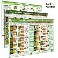 [3er Set] Essbare Wildkräuter für Grüne Smoothies Poster (DINA2) Teil 1 & 2 und Grüne Smoothies für jeden Tag Poster (DINA2) - (2018) -Wildkräuter ... und Grüne Smoothies richtig zubereiten