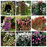 450 Pcs Climbing Roses Seeds,Climbing Plants ,Chinese Flower Seeds ,9 Species Variety, Each Of Variety 50 Pieces,+ Gift